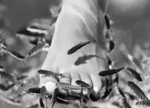 Аквариумная рыбка петушок содержание и уход кормление